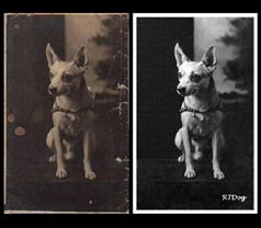 Old Dog Photograph Restoration - Before and After Image