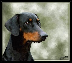 Small Doberman Portrait Picture - Link to Gallery One