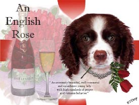 Small English Springer Spaniel Picture - Link to Artwork Gallery Three