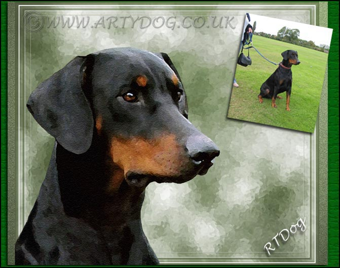 Doberman Portrait - Before and After